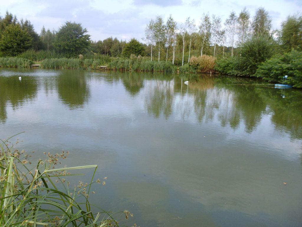 Glebe Pool 8
