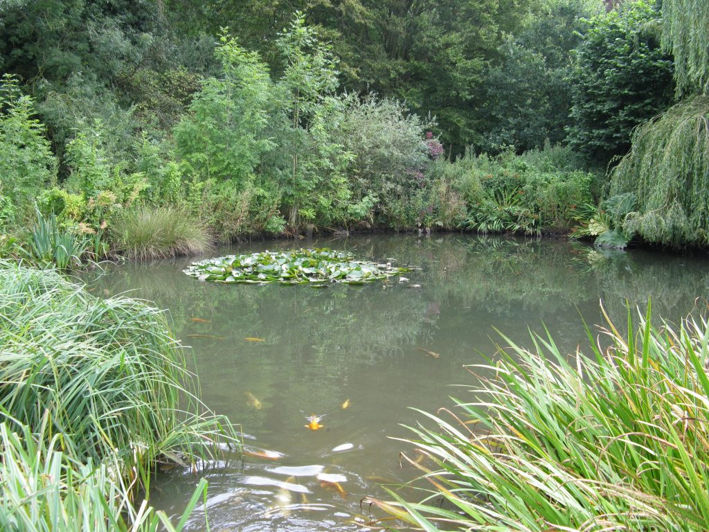 Glebe Nature Pond